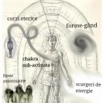 5 Atasamente Aurice care Distorsioneaza Perceptia si Interpretarea Realitatii